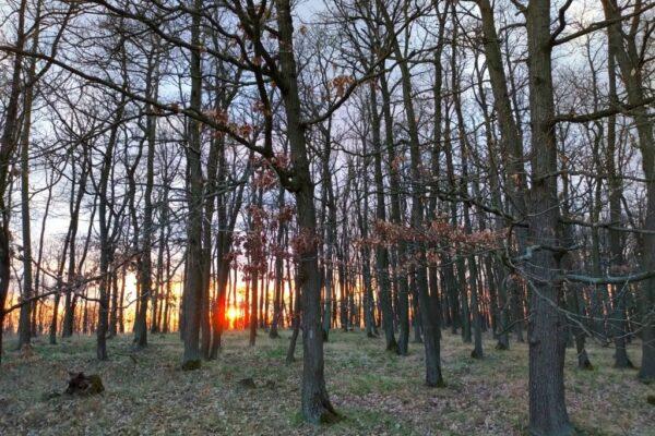 Náš nový les